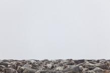Seals, space