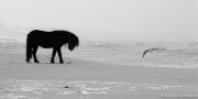 Horse, Gull and Sea