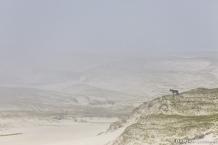 Horse, dunes, space