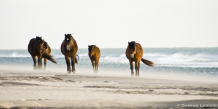 Reservoir Horses