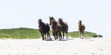 Gallop on North Beach