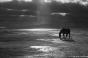 Horse, Light, East
