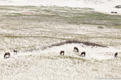 Matchstick horses