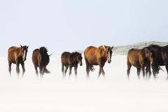 Horses, South Beach