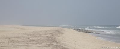 Grey seals, South Beach, Sable Island