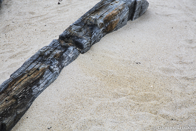 Shipwreck, Sable Island