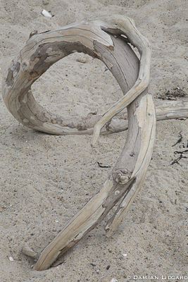 Beach wood, Sable Island