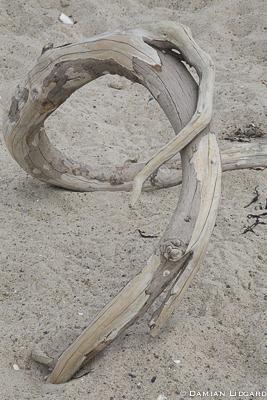 Beach wood, Sable Island