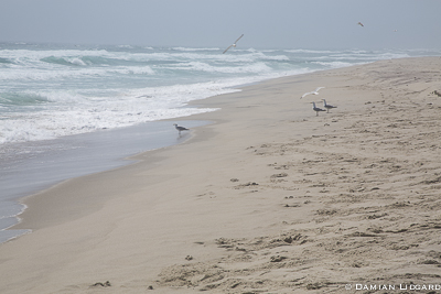 Surf, beach and gulls Sable Island