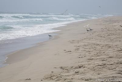 Surf, beach and gulls Sable Island