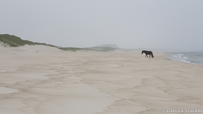Lone horse on South Beach