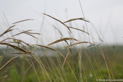 Grass in abundance
