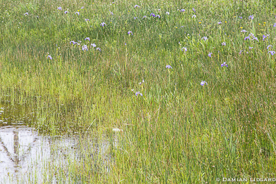 Wetland, Sable Island