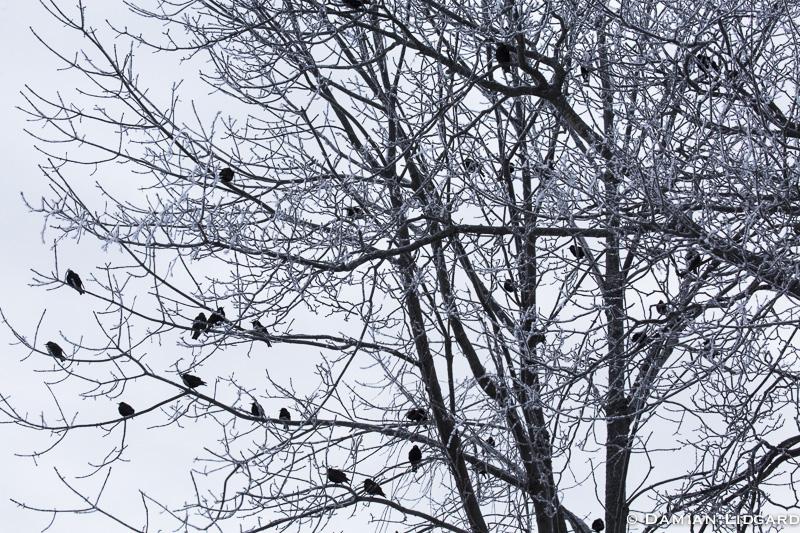 A frosty morn perception