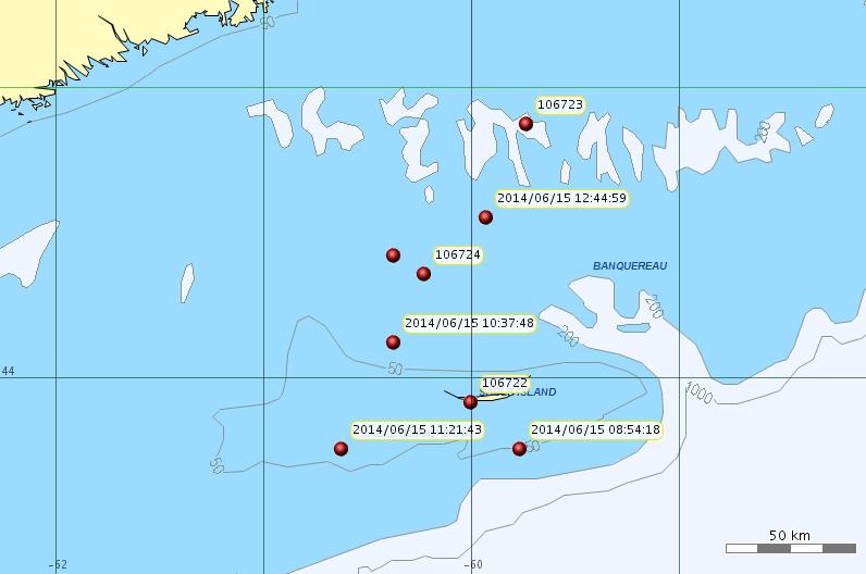 Grey seals on Eastern Scotian Shelf