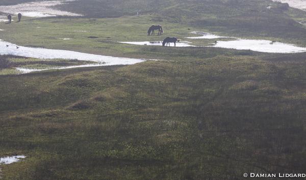 Setting sun, grazing horses, Sable Island