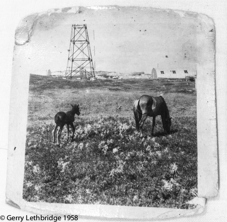 Sable Is. horses grazing near West Light