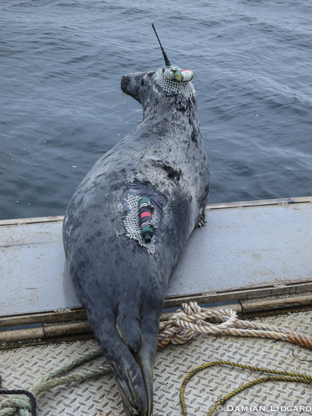 Tracking seals by satellite and bluetooth
