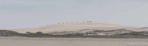Bald dune + tourists, Sable Is.