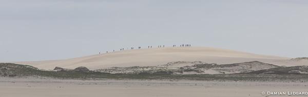 Bald dune + tourists, Sable Is.